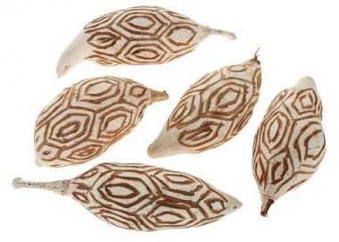 Baobab gedroogde vruchten - Aztaki, 5 stuks